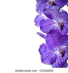 Border of orchid flower (vanda blue) isolated on white
