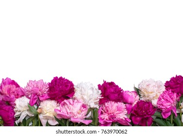 Border of peonies isolated on a white background. Floral design. Pink and purple spring flowers. View from above, flat lay, top view