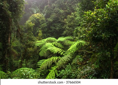 Border Ranges National Park, New South Wales (Australia)