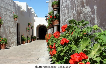 Border of red geraniums in a street of Santa Catalina Monastery in Arequipa, Peru