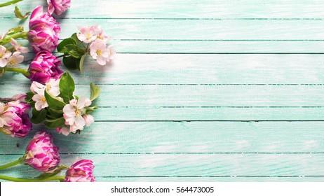 Die Grenze von Frühlingsblumen und Apfelblumen auf türkisblauem, lackiertem Holzhintergrund.Selektiver Fokus. Platz für Text. Tonisches Bild.