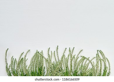 Border of white common heather flawers on white wooden background. Copy space, top view.
