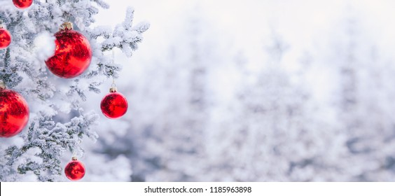 Border winter nature christmas background with frozen spruce branch with glitter lights, bokeh, snow. View through the white frost pine branch. Happy new year frame pastel card. Text space. Red ball.