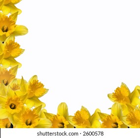 A border of yellow daffodils isolated on white.