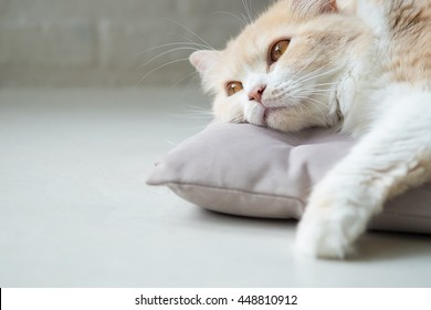 Bored cat lying on bed