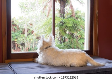 Bored dog with separation anxiety is indoors home alone while owner is at work, looking outside through window into garden dreaming of adventures