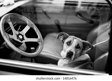 Bored dog in sitting in car looking through window