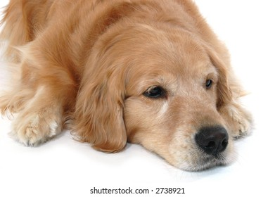 Bored or sleepy looking dog