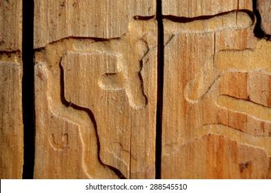 Borer path at wood