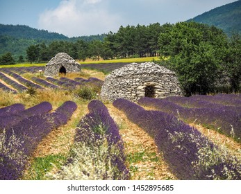 Borie dry stone huts in lavender fields of provence
