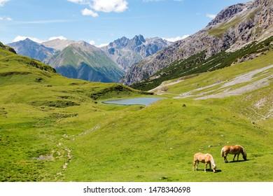 Bormio - Livigno (IT) - Val Alpisella - grazing horses