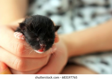 Born kitten on hands