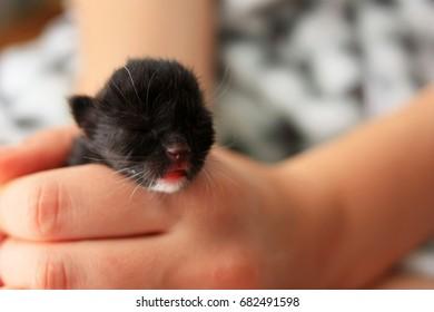 Born kitten on the palms