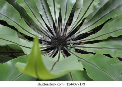 Borneo nature special plant