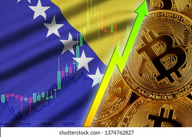 Bosnia and Herzegovina flag and cryptocurrency growing trend with many golden bitcoins