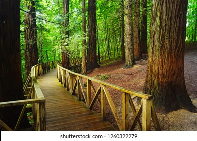 Bosque De Secoyas, Cabezón de la Sal, Cantabria, Spain