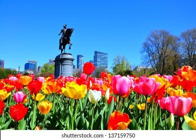 Boston city from tulip garden in Public garden, USA