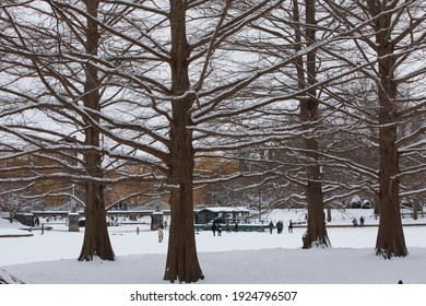 Boston common park at the winter, after a snow storm.