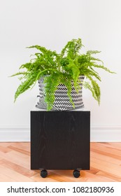 Boston fern plant in a black and white basket, on a side table with wheels.