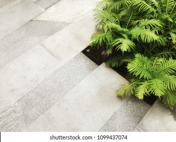 Boston Ferns with copy space on floor