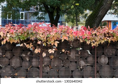 Boston ivy on the gabion with filled wood. This image may be used as a background.