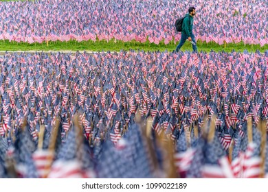 Boston, MA, USA-May 26, 2018. Man walks among hundreds of US flags planted in Boston Common to commemorate fallen soldiers on Memorial Day.