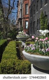 Boston Massachusetts Back Bay Flowers Scene