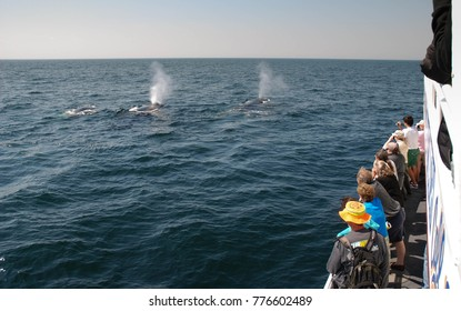Boston, Massachusetts - September 2008: Tourists on a boat watch the spouts of humpback whales in the Stellwagen Bank National Marine Sanctuary in Massachusetts Bay