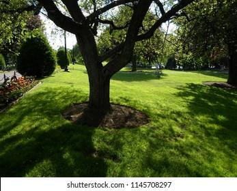 Boston, Massachusetts / USA - July 30 2018: Trees, bushes, grass and lagoon, Boston Public Garden