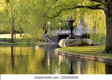 Boston Public Garden. Japanese lantern, lagoon bridge, weeping willows, white swan