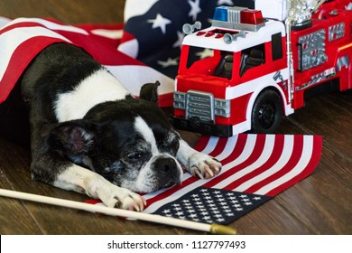 Boston terrier celebrating the 4th of July Independence Day with patriotic American flag and American red fire truck icons of the USA