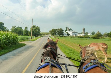 Boston - USA - 08-23-2015:  Horses pull a buggy, a typical Amish carriage
