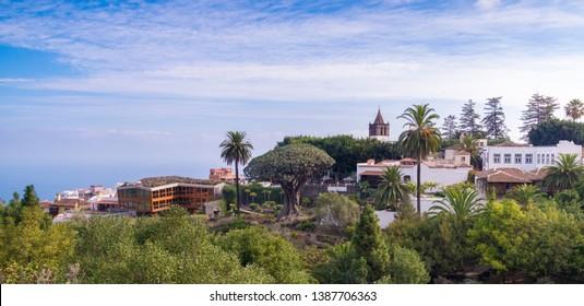 botanic garden with a 1000 year old dragon tree Drago Millenario in Icod de lod Vinos, Tenerife