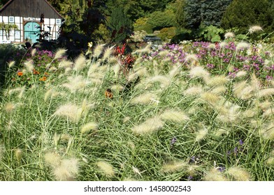 Botanic garden in Bielefeld, Windy grass in the botanic garden in Germany