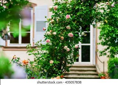 Botanic garden with blossom flowers, Andlau, Alsace, France
