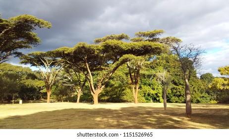 Botanic Garden, Harare, Zimbabwe