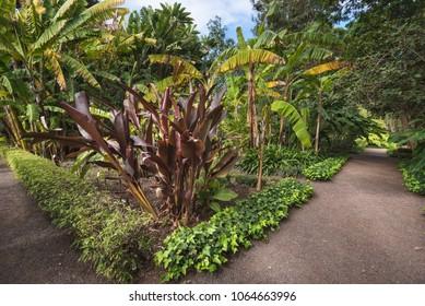 Botanic garden in Puerto de la Cruz, Tenerife, Canary islands, Spain.