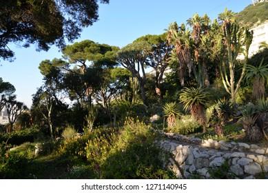 Botanic Gardens, Gibraltar, Europe