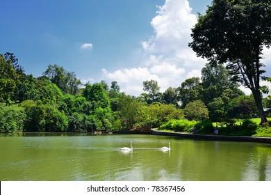 Botanic Gardens Swan Lake, Singapore