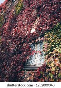 botanica autumn flora