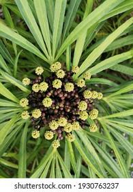 botanical bloom outdoor trass flower