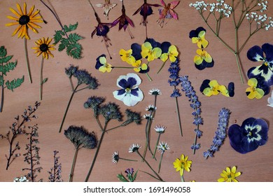 A botanical collection of pressed garden and wild flowers . Includes daisies , pansies , lavender ,fern and fuchsia. A nature inspired background .