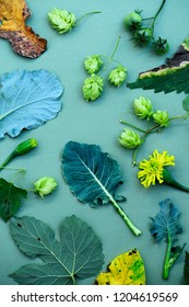 botanical composition of hops, cabbage, green tomatoes and foliage on a green background.