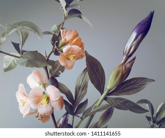 Botanical composition with iris bud and spring flowers, gray background.