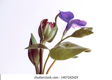 botanical composition, spring flowers on a white background