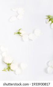 Botanical floral modern backgrounds, white roses flat lay,  flower-filled border.