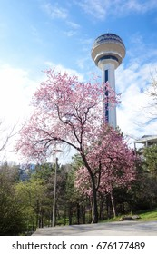 Botanical garden in Ankara, the capital city of Turkey
