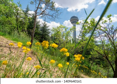 Botanical Garden and Atakule in background in the spring, Ankara, Turkey