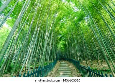 Botanical Garden Bamboo Forest Path