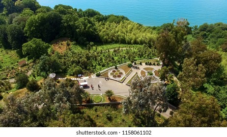 Botanical garden in Batumi Georgia outstretched over hills by coast, nature
